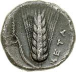 reverse:  Lucania, Metapontum   Nomos, 330-300 a.C.