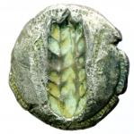 reverse: Mondo Greco. Lucania. Metaponto. 520 a.C. Statere. Ag. D/ Spiga a destra META. R/ Spiga di grano in incuso. Mont.2200. Peso 7,90 gr. Diametro 23,65 mm. BB+.§