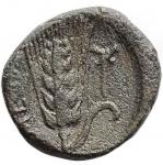 reverse: Mondo Greco - Lucania. Metaponto. ca 300-250 a.C. Ae. D/ Testa di Dioniso ? a destra. R/ META Spiga Torcia. Peso gr. 2,77. Diametro mm. 15,83. qSPL. R.