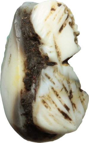 R/  Head of woman resembling Aquilia Severa. Sardonyx Cameo, with black and white layers. Roman Period, 200-250 AD. 12 mm.