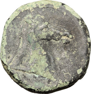 Reverse image of coin 15