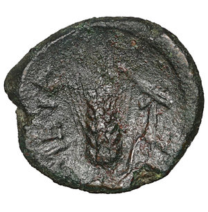 reverse: Lucania. Metapontion. 300-250 BC. Bronze. AE 2.40 gr. – 15.4 mm. O:\ Head of Herakles r., beardless and wearing lion-skin. R:\ META, barley-ear with leaf to r. above, cross-torch. Johnston 46; HNItaly 1682; SNG Copenhagen 1251; SNG ANS 1270. Rare. Brown patina. aXF