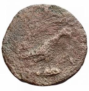 reverse: Mondo Greco - Apulia. Salapia. ca300-225 a.C.AE. D/ Testa di Pan (?) a destra.R/ Falco a destra.Cfr. Garrucci T. XCIII, 37.Pesogr. 2,6. Diametro mm.16,2.MB+. RR.