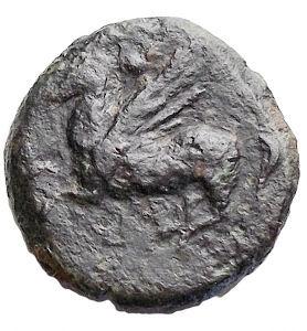 reverse: Mondo Greco - Sicilia Punica. ca 300-264 a.C.AE. D/ Albero di palma. R/ Pegaso a sinistra. Peso 1,82 gr. Diametro 14,2 mm. ConservazioneBB+. R
