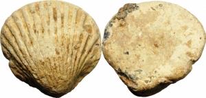 obverse: Fuso. Conchiglia/Shell (circa, IV-III Secolo a.C.). PB (28,50 gr. – 24 mm.). BB+. Raro.