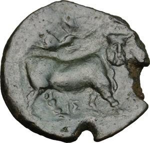 reverse: Central and Southern Campania, Neapolis. AE 19mm, 275-250 BC
