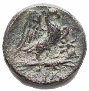 reverse: Mondo Greco - Calabria, Graxa. AE 14.5 mm. c. 250-225 ac. gr 2,4.SNG ANS 797. BB. Patina verde intenso. Rara