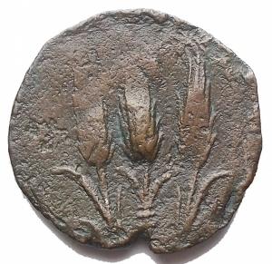 reverse: Mondo Greco - Dominio Cartaginese. Sardinia. ca 241-238 ac. Ae. gr 3,65. mm 20,1. d/ Testa di Tanit a sn. d/ Tre spighe.SNG Copenhagen 252. BB-SPL/BB+. Bellissimo ritratto