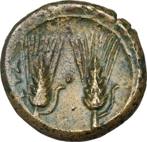 reverse: Southern Lucania, Metapontum. AE 17 mm, late 3rd century BC