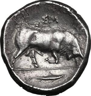 reverse: Southern Lucania, Thurium. AR Distater, c. 350-300 BC