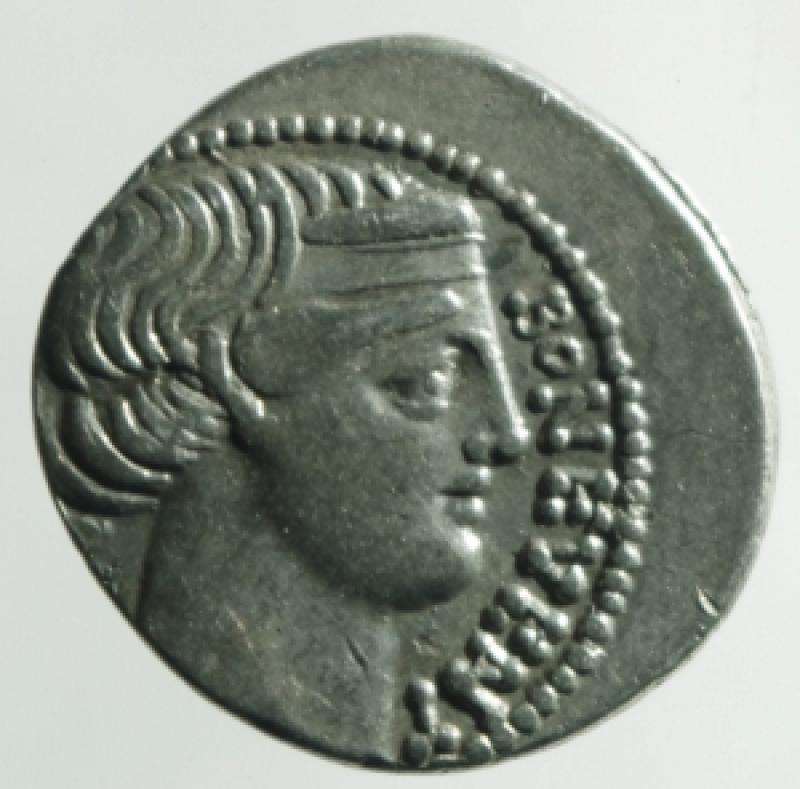 obverse: scribonia denario