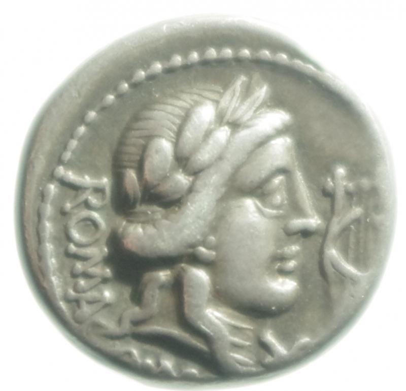 obverse: fabia denario