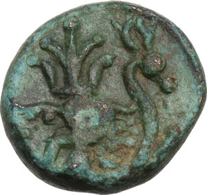 reverse: Pisidia, Selge.. AE 13.5 mm. 2nd-1st century BC