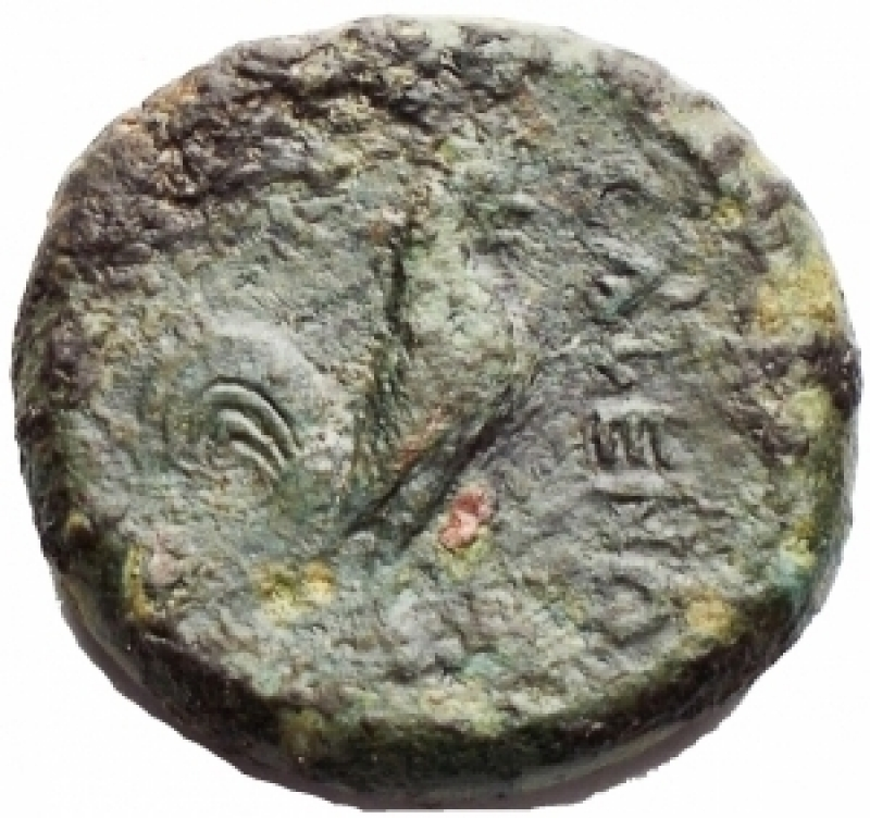 reverse: Mondo Greco - Campania. Cales. Ca 265-240 AC. Ae 19,5 mm. D/ Testa elmata di Athena a sinistra. R/ Gallo stante a destra, davanti etnico. g 7,7. qBB.Patina verde.