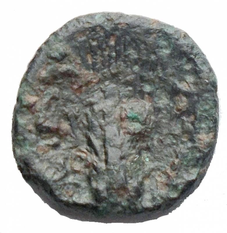 reverse: Mondo Greco - Lucania. Metaponto ca 330-250 aC. Ae. d/ Testa di Apollo Carneio a sinistra r/ Spiga. gr 1,2. mm 11,34. BB. RR