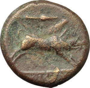 obverse: Northern Apulia, Ausculum. AE 21 mm. c. 300-275 BC