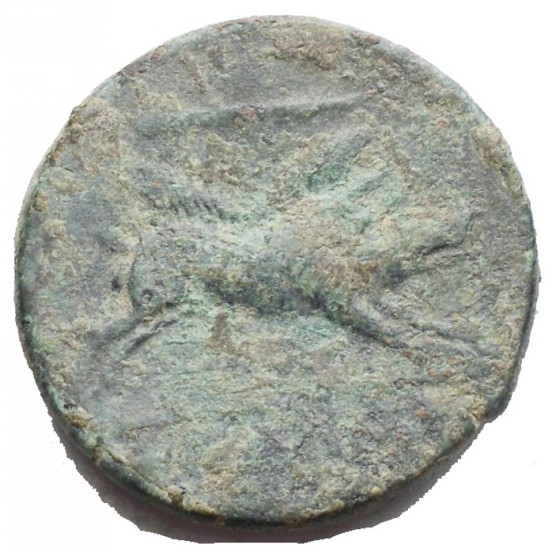 reverse: Mondo Greco - Apulia Arpi (III sec. a.C.) Obolo.D/ Testa di Zeus a sinistra.R/ Cinghiale a destra, sopra punta di freccia. Gr. 6,8. AE.SNG ANS 635.BB+/BB.Bella patina verde