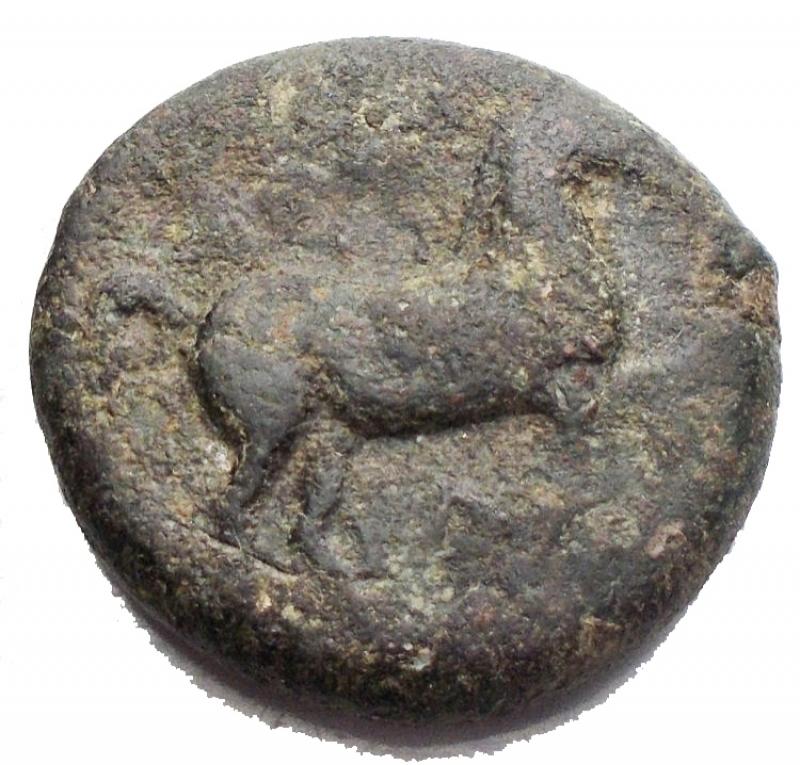 obverse: Mondo Greco - Apulia. Salapia. III sec. a.C.Bronzo. D/ Cavallo in corsa verso destra. R/ Delfino verso sinistra sotto etnico. Peso 7,97 gr. Diametro 20,08BB. R.
