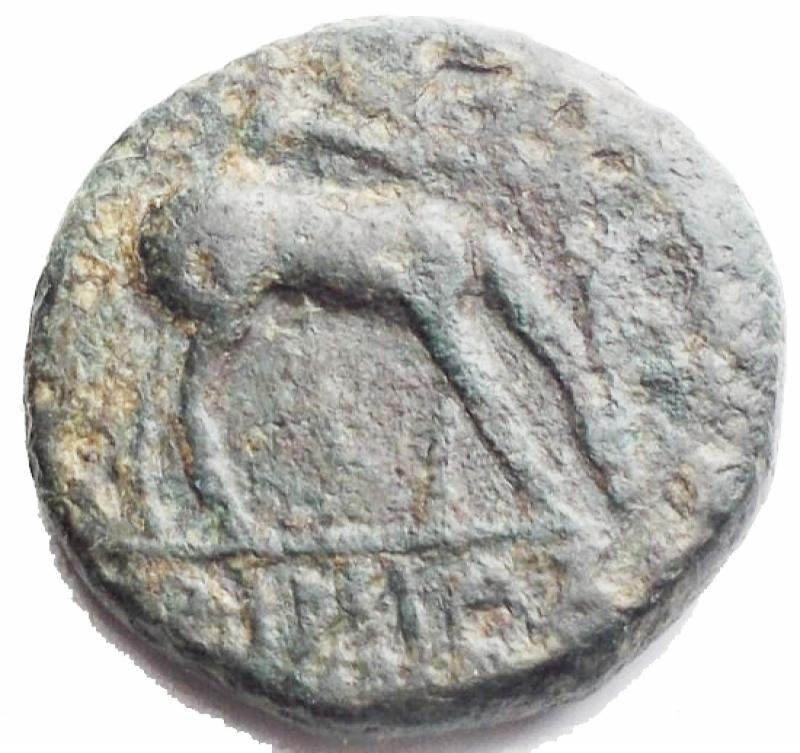 reverse: Mondo Greco - Efeso. 280-252 ac. AE. gr 3,5. mm 15,5. d/ Ape in corona r /Cervo al pascolo a ds. Sopra faretra. BB. Patina verde