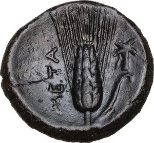 reverse: Southern Lucania, Metapontum. AE, 275-250 BC