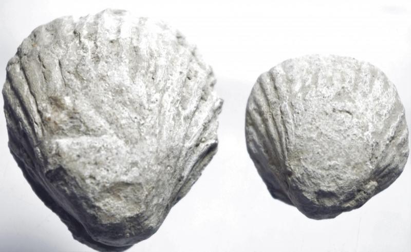 obverse: Repubblica Romana.2 elementi fusi in piombo a forma di conchiglia. Elemento 1 peso 69,30 gr. 31mm circa Elemento 2 Peso 33,75 gr. 34 mm.BB+.ms