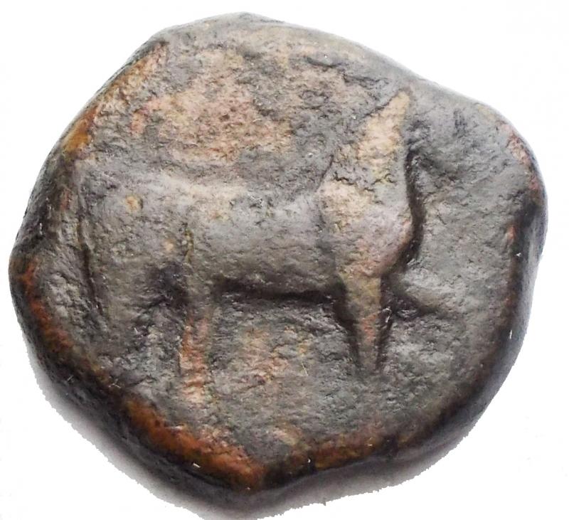 obverse: Mondo Greco. Apulia Salapia(Circa 275-270 a.C.)AE 19,4mm.D/ Cavallo a destra. R/ Delfino a sinistra. 6,02gr. HN Italy 685.RR.