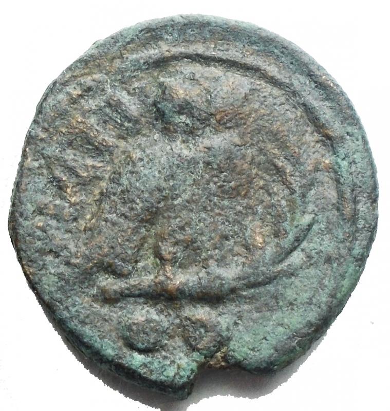 reverse: Mondo Greco -Apulia. Teate.225-220 a.C.Biuncia.AE.D/ Testa di Athena a destra.R/ TIATI. Civetta stante a destra, con la testa di fronte, davanti palma. In esergo due globetti.Pesog 4,16. Diametromm 17,68. BB+. Patina
