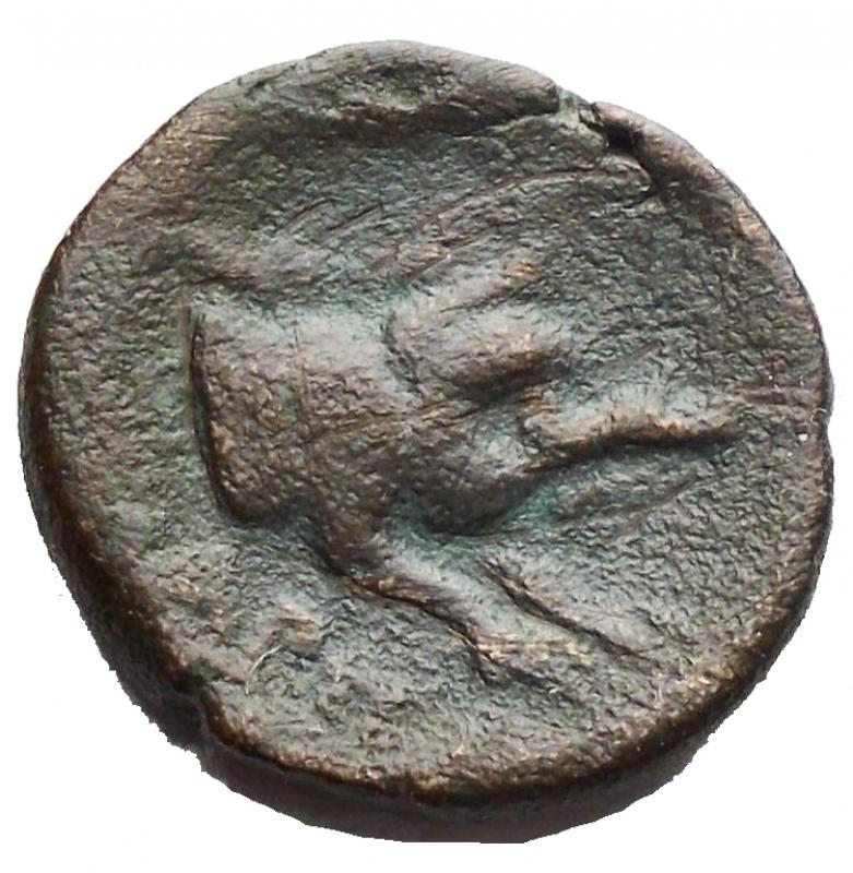 obverse: Mondo Greco - Apulia Arpi (Circa 325-275 a.C.) AE. g 3,74. mm 15,01 D/ Testa di Zeus a sinistra. R/ Mezzo cinghiale a destra HN Italy 643. qBB/BB