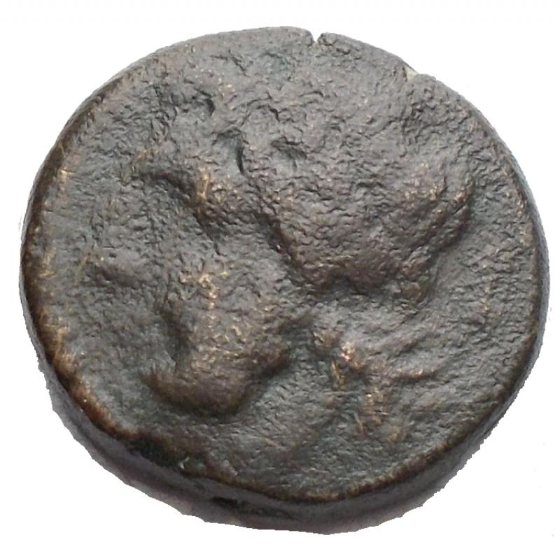 reverse: Mondo Greco - Apulia Arpi (Circa 325-275 a.C.) AE. g 3,74. mm 15,01 D/ Testa di Zeus a sinistra. R/ Mezzo cinghiale a destra HN Italy 643. qBB/BB