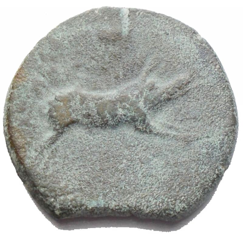 reverse: Mondo Greco - Apulia Arpi (Circa 325-250 a.C.) AE 20,9 mm. D/ testa di Zeus a sinistra. R/ Cinghiale a destra, sopra lancia. 6,46 gr. HN Italy 642. BB-SPL/BB+. Bellissimo ritratto. Patina verde marrone