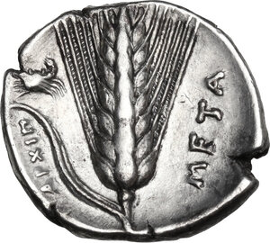 reverse: Southern Lucania, Metapontum. AR Stater. c. 340 - 330 BC